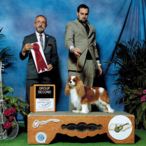 Cavalier Dogs
